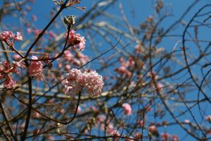Blossoms up in the sky by BecciES