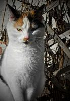 Evil Kitty by Lithium--x