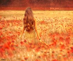among the poppies by katmary