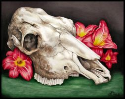 Cow Skull Still Life by SioUte