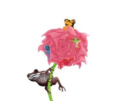 Rose Frogs by Krullish