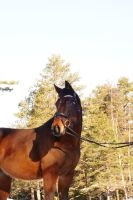 Swedish Trotter by Cylinda4Ever