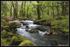 Golitha Falls 09 by Kernow-Photography