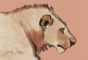 Quick lion study by lwatson74