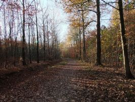 Autumn Forest Path Backround Stock by AngelSTOCK22