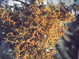 Tree Moss 4 by TheGerm84
