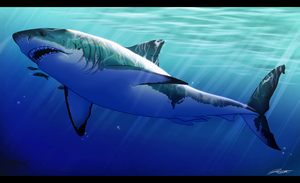 Great White Shark by DJCoulz