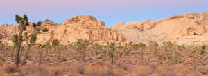 Joshua Tree Sunset by MirMidPhotos