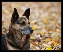 Autumn dog 2 by Alexandra35