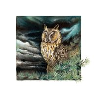 Long eared owl by Heliocyan