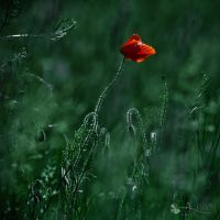 Gone with a wind... by ildiko-neer