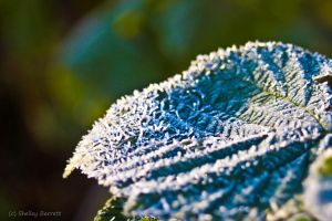 Frost 1 by dragongoddess62