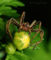 Face to face with spider by ironman80