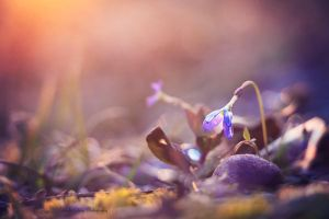 Signs of Spring by MidnightDaisyStudio