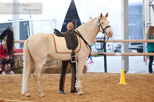 Cremello Lusitano_8 by CalyHoney