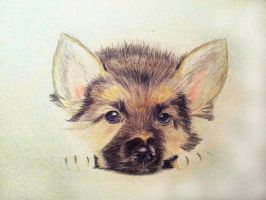 Dog by sophicardia