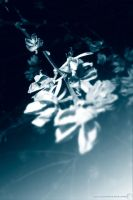Untitled or Blue Flowers by nada