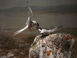 Tern by Flyg-stock