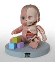Lil' Cutsie Anatomical Model by freeny