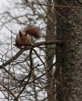squirrel by xrust