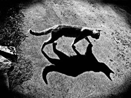 two cats by foodshelf