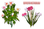 Flowers04 by brotherguy by BrotherGuy