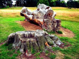 Tree Carving at University Park by Owt-n-Abowt