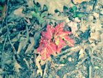 Leaves 1 by balto123