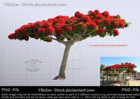 Flamboyent Tree by YBsilon-Stock by YBsilon-Stock
