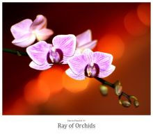 Ray of Orchids by signmeupscotty