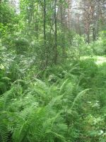 Fern glade 1 by Garr1971