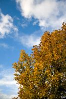 Autumn by CopperbeltJack