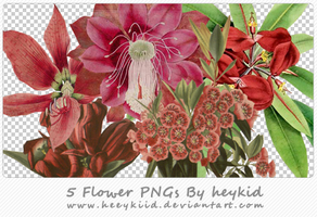 5 Flower PNGs By heykid by heeykiid