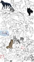 Wolf Sketches by Aliuh