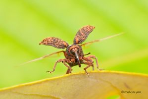 Weevil take off by melvynyeo
