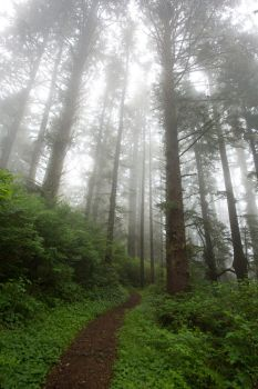 Misty Forest Path Stock by leeorr-stock