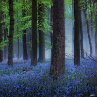 Misty Blue by redtreeme
