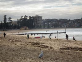 Manly Beach by BrendanR85