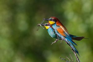 Bee eaters by JMrocek