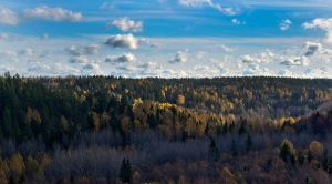 Colors of fall by PekkaHartikainen