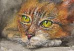 Red cat watercolor painting by belka10
