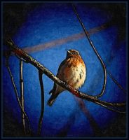 FotoSketcher Birdie by Tailgun2009