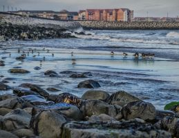 Hartlepool harbour by steveearl