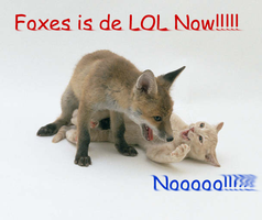 foxes is de lol by snowleezard