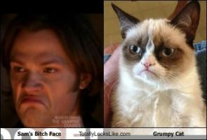Sam Winchester Totally Looks Like Grumpy Cat by AraneLuna