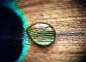 drop on a feather by margaretaseewald