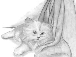 A cat by Anetteee