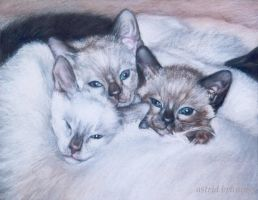 Jezabelle's Kittens - Pastel by AstridBruning