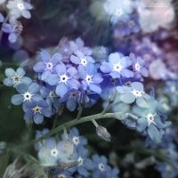 Forget-me-not by Dotblackdot
