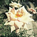 Flower3 by imad95